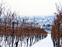 winter_-_ueber_deidesheim_in_der_frueh_213